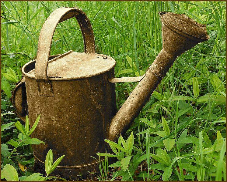 Fiches jardinage c t jardin for Conseil jardinage